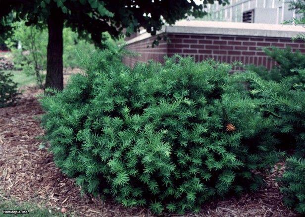 Shady Backyard Landscaping Ideas