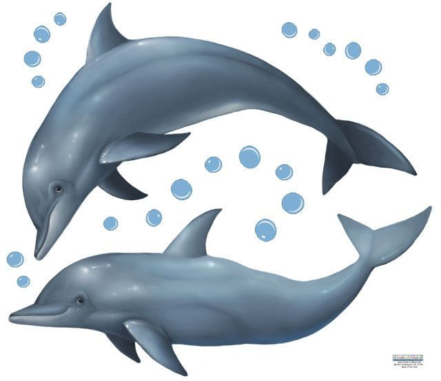 17 Best Ideas About Dolphin Bedroom On Pinterest