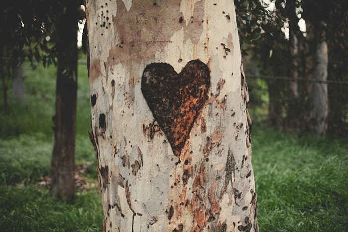 Images about hearts and initials carved in trees