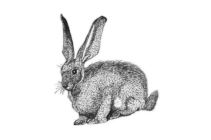 Rabbit ,nursery art,black and white pen and liners illustration, instant art,kids room decor. by littlelemontreeart on Etsy