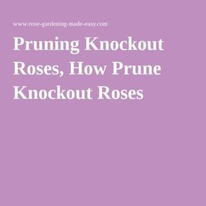 Pruning Knockout Roses, How Prune Knockout Roses More
