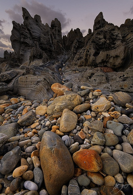 Tarkine wilderness, Tasmania, Australia, Photo by Hillary Younger