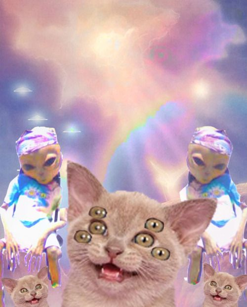 103 Best Images About The Muppets On Pinterest: 103 Best COSMIC CATS Images On Pinterest