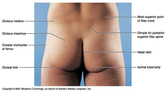 What causes pain on the left side above the hip  Quora