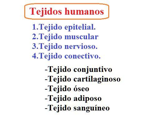 Tejidos humanos: introducción | Dr.Sanagustín | Medicina y Psicología. http://www.albertosanagustin.com