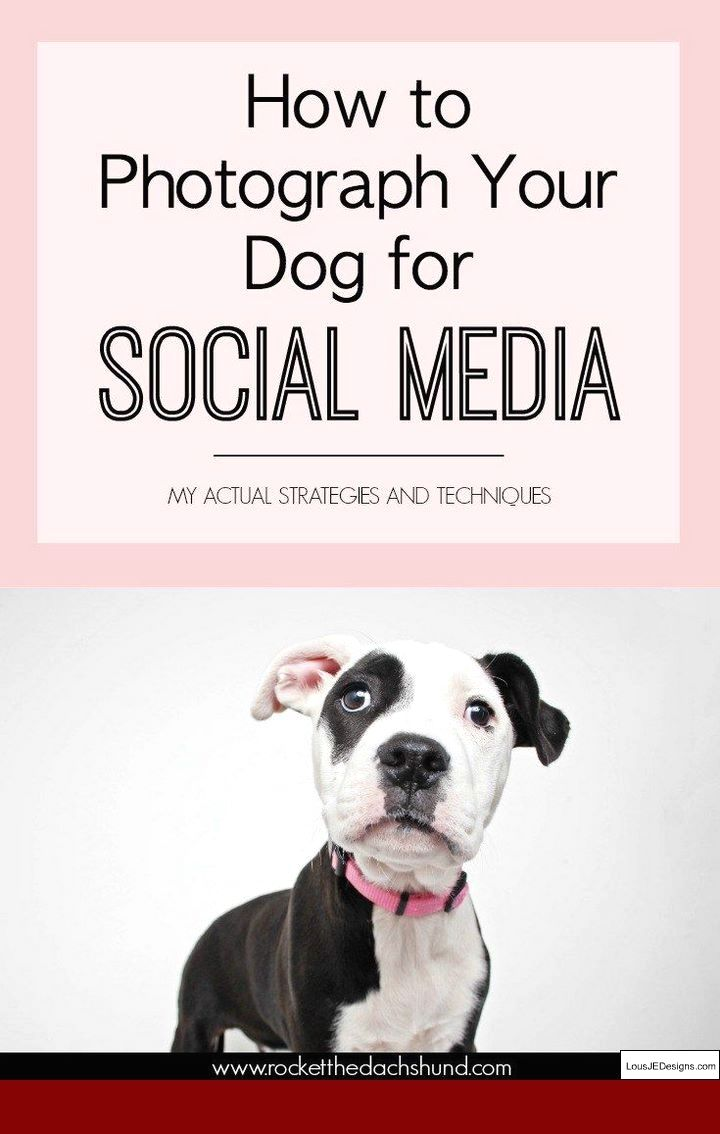 How To Teach A Dog Not To Bark For Attention And Pics Of Tips On