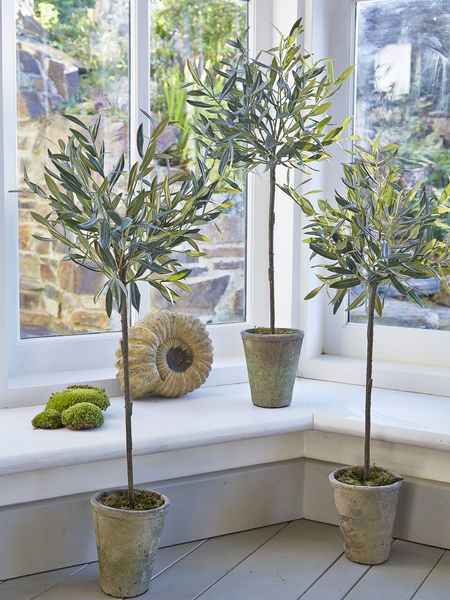 We are so excited by these incredibly life-like medium olive trees - they are almost indistinguishable from their Mediterranean counterparts thanks to pretty grey-green foliage.