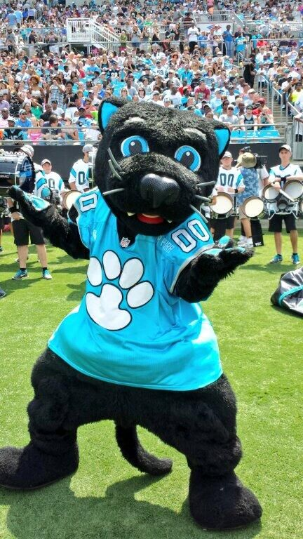 from Carolina Panthers ‏@Josh Swafford Our favorite Carolina cat @PanthersSirPurr is about to hit the field! #PanthersFanFest