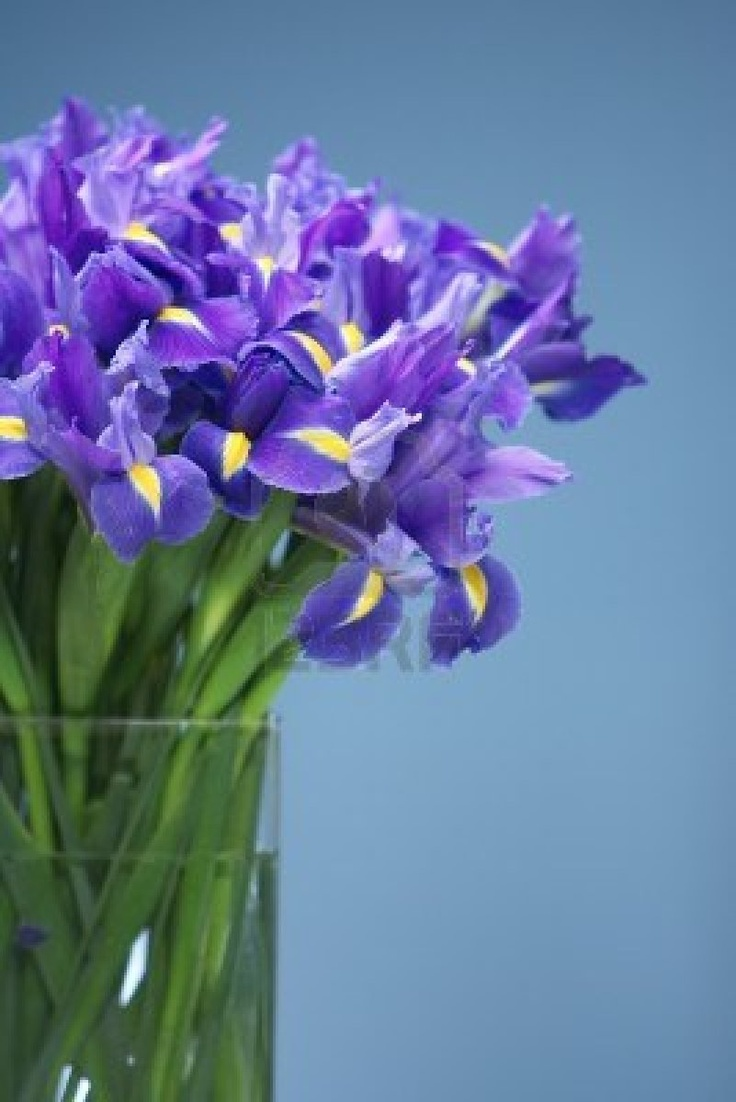 13 Best Images About Iris On Pinterest Florists Stack And Glass Vase