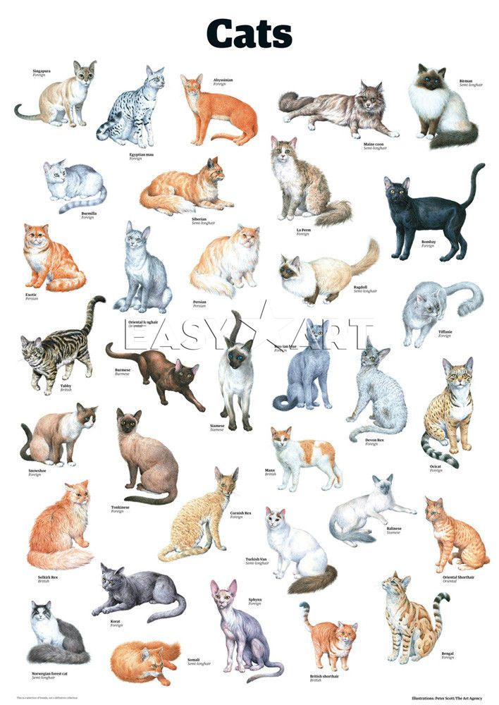 Cat Breed Data Visualization