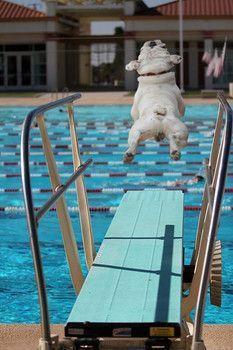 Buen salto!!