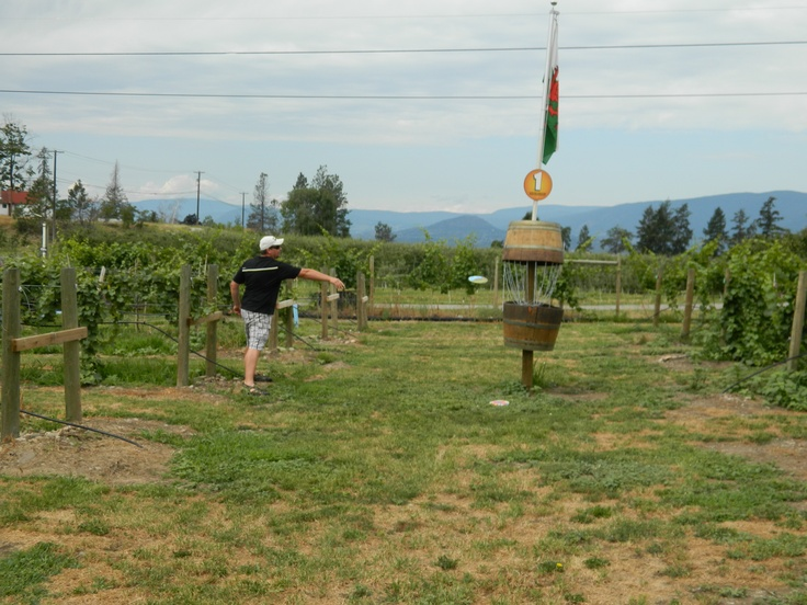 Disc Golf at Vibrant Wines in Kelowna BC. Quirky 4 hole course through the vineyard. GREAT wine too :) -- Curated by: Ultimate Social Club | #4 1900 46th avenue | 2505494418