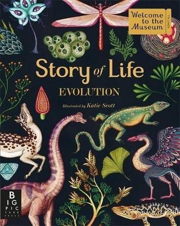 Story of Life: Evolution by Katie Scott. A graphic, fold out guide to evolution. The book will start with the first single-cell organisms and end with modern life forms.  Read it as a book or fold it all the way out.