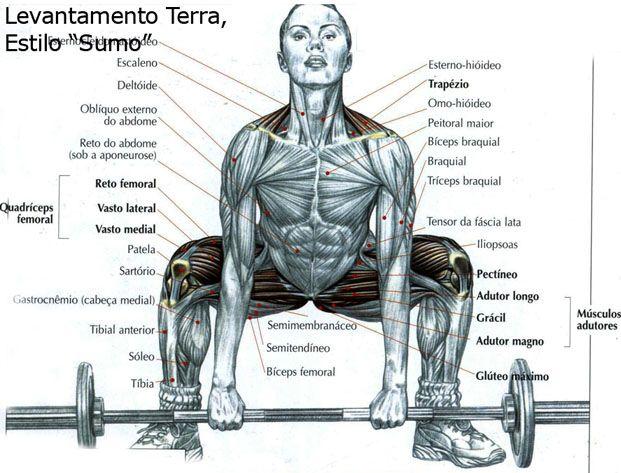 Levantamento terra estilo sumo.Exercícios para ganhar massa muscular