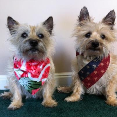 Sweet picture of Sadie and her sister Kayla La, adopted Col. Potter Cairn Rescue. See them at Hanging the Moon! https://www.facebook.com/HangingTheMoon