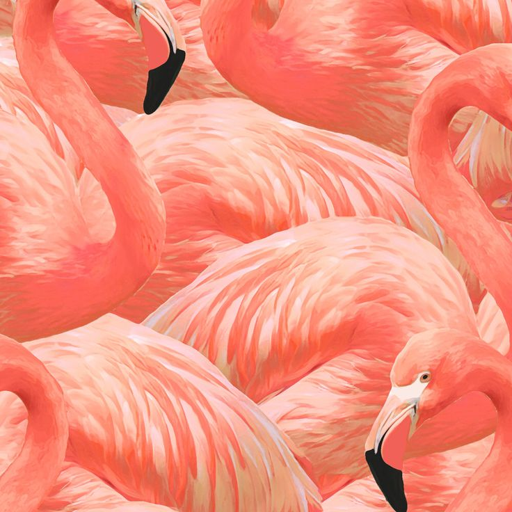 Flamingo Fabric - Flamingo Fever In Coral By Willowlanetextiles - Flamingo Cotton Fabric By The Yard With Spoonflower by Spoonflower on Etsy https://www.etsy.com/ca/listing/510600375/flamingo-fabric-flamingo-fever-in-coral
