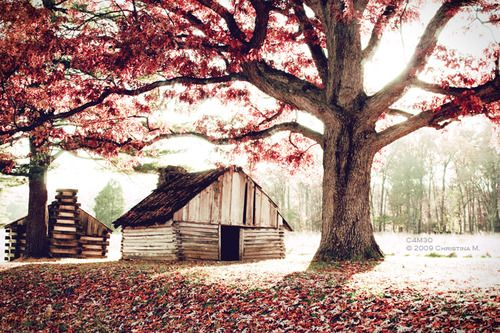 Rustic barn with large, old tree