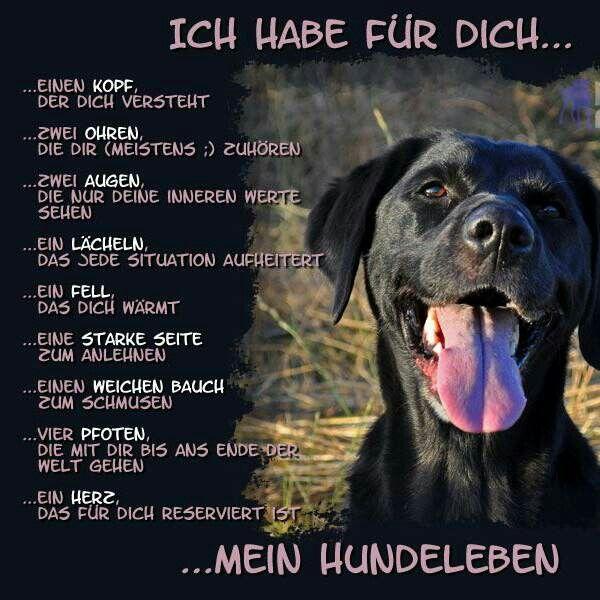 An alle Hundeliebhaber, die ihren Schatz genauso lieben wie ich! 🐾❤