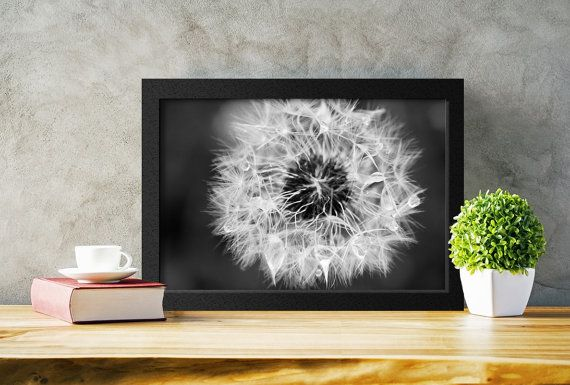 Printable Black and White Dandelion Photograph, Macro Photography by PlayfulPixieStudio.  The perfect addition to any home decor, ready to download and print instantly!  #dandelion #walldecor #printable