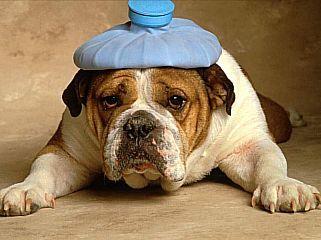 I consigli della nonna.                                         M.                         Mal di testa.                               Applicate impacchi di foglie di cavolo o fettine di patate crude sulle tempie.