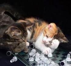 Gattini che giocano a scacchi