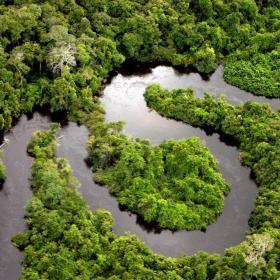 Amazon Rainforest Peru | Tambopata National Reserve Tours | Explorer's Inn