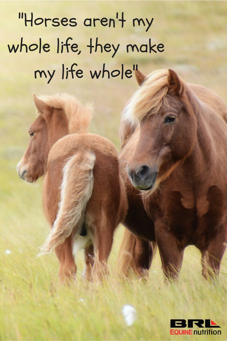 Pics photos quote i wrote for my horse com account s equestrian - Horses Make Life Whole Quote Brlequinenutrition Brlequine Horses Loveyourhorse