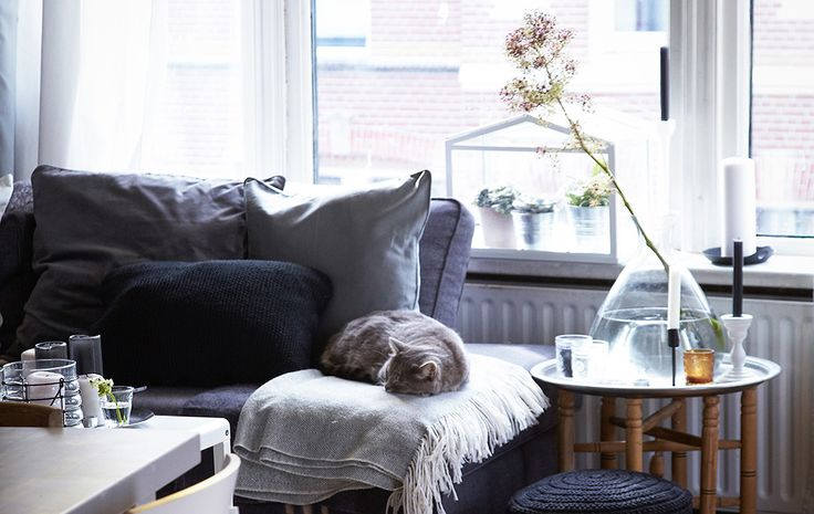Bild på vardagsrum i gråskala med en katt som sover på en grå soffa.