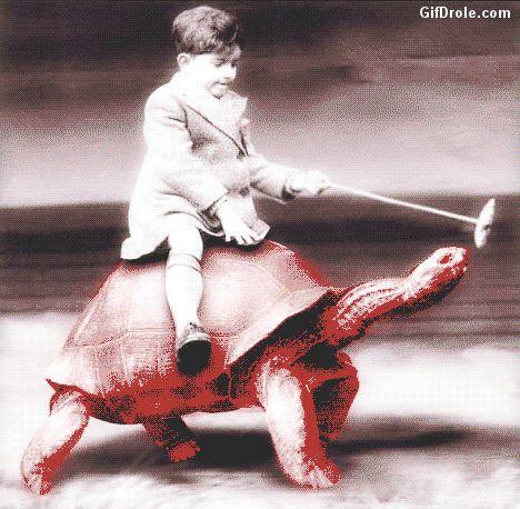 Gifs Humour Tortues. Les Gifs animés les plus drôles de tortues terrestres et marines. Images animées humoristiques de tortues très rigolotes. Cliparts animés marrants de petites et grosses tortues de Floride