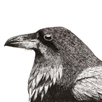 Raven Pen & Ink by Ben Farnell  http://ift.tt/2AgNjvo  http://ift.tt/2hHdSi6  #birdartben #penandink #raven #etsy #birds #birdart