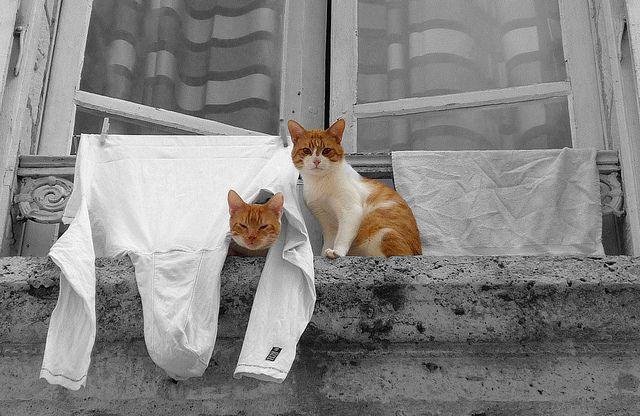 Cat Acting Strange Litter In Strange Places