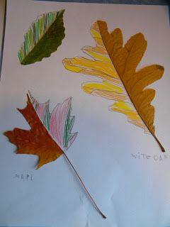 La forme des feuilles d'arbre.
