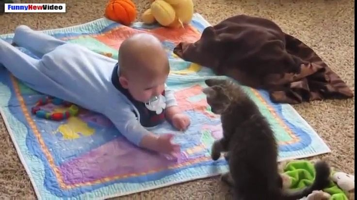 Funny Videos Of Cats And Babies Compilation 2015 - http://homedesign123.top/funny-videos-of-cats-and-babies-compilation-2015/