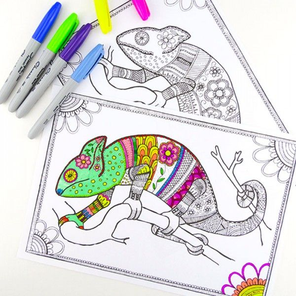 colouring pages for grown ups chameleons