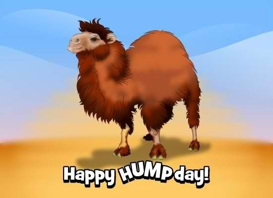 Happy Humpday quotes quote days of the week wednesday humpday hump day camel wednesday quotes camels happy wednesday