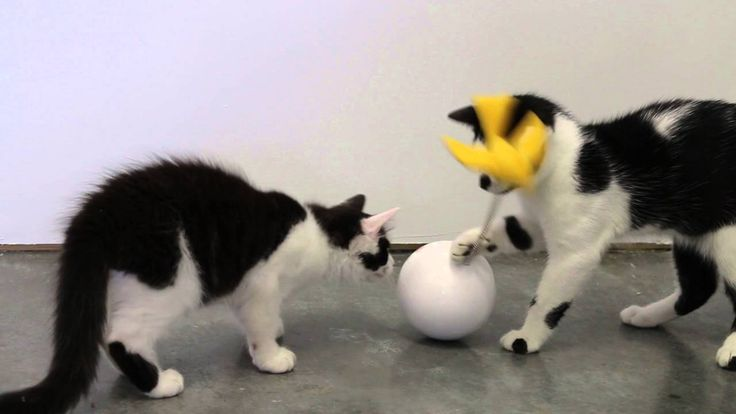 Frolicat Chatter Cat Entertainer