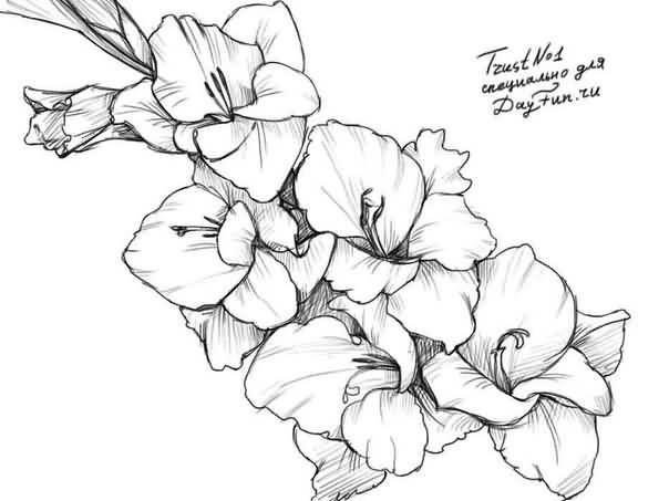 Beautiful Nice Gladiolus Flowers Tattoo Stencil