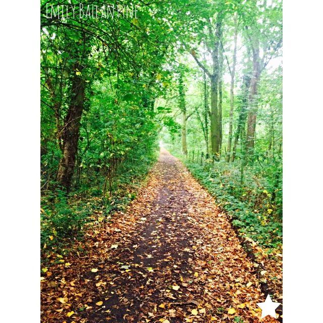 Autumn leaves. #madewithstudio