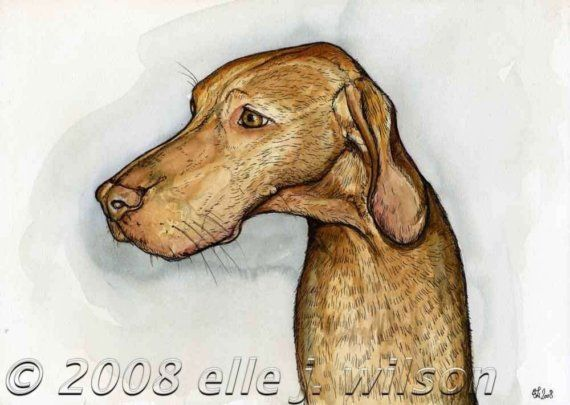 The Little Compaignon  Hunagrian Vizsla Hound by AlmostAnAngel66