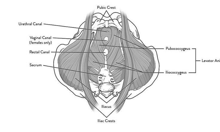If youve never had your pelvic floor released, consider hunting down an integrative structural specialist: Its a weird sensation, for sure, and generally reveals a shocking revelation. While you might assume that this muscle web …
