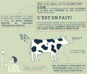 OGM et traitements préventifs pour les vaches et pour nous