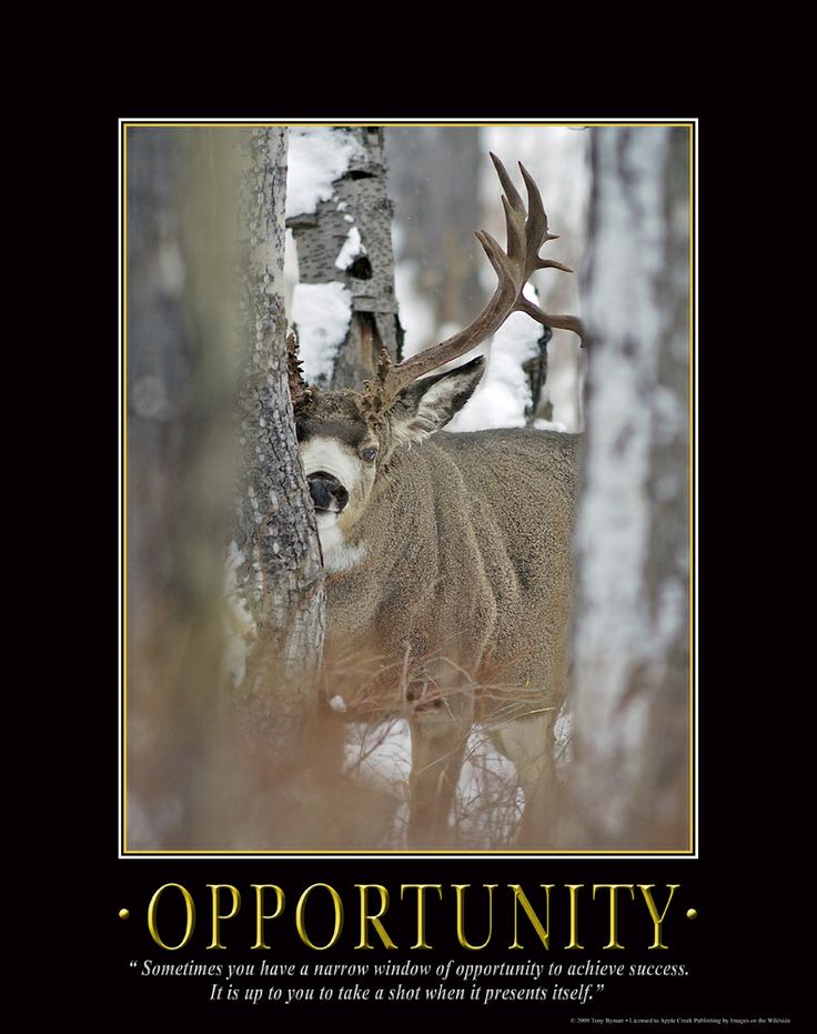 17 best images about hunting on pinterest deer hunting for Window of opportunity