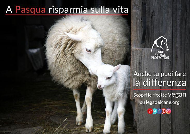 Maggiore rispetto per la vita di tutti, animali e umani, con un menu #crueltyfree e salutare affinché questo giorno sia davvero la festa della rinascita. #LNDC lancia il suo nuovo marchio per sottolineare il proprio impegno a favore di tutti gli animali.