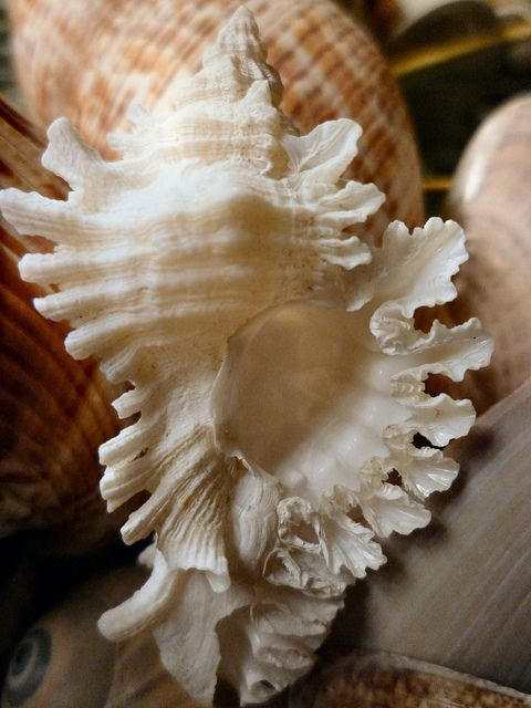 Sanibel Island Seashells by Lee Ryfun, via Flickr