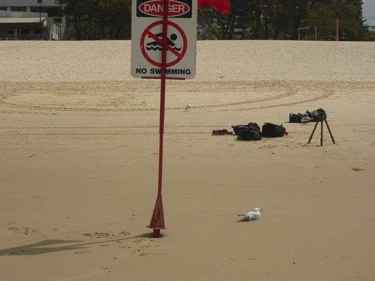 No swimming at this point on the beach - so thought i'd chill with the local birds.
