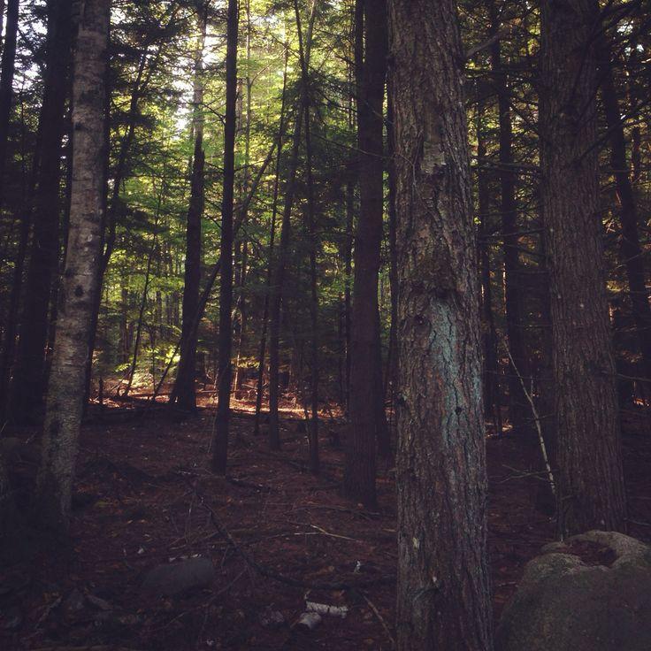 University of Maine Trails  Orono, Maine 2015 Photo by Enya Calibuso