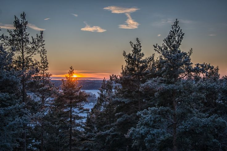 Sun setting over Ekerö, Sweden, on a cold winter day. Clear blue sky with a few clouds and treetops in front.