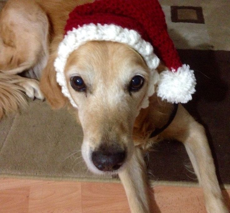 Proud of myself - I designed a Santa hat that my dog can't get off!  Sized for large breed dogs  - pinned by pin4etsy.com
