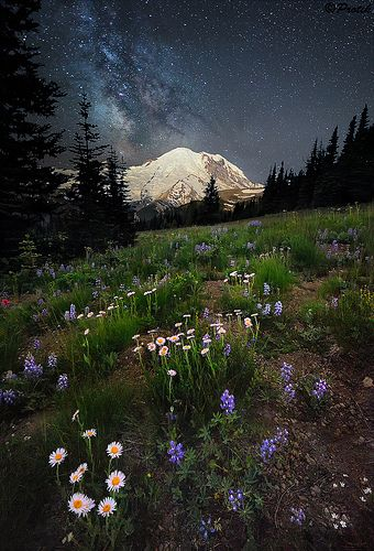 Starry night. Taken from Sunrise point of Mount Rainier. The mountain was lit by moon rising from the opposite side. The meadows were lit partially by moonlight and partially by my headlamp. By protikH on Flickr.