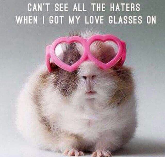 animals in glasses | heart shaped frames | Can't see all the haters when I got my love glasses on